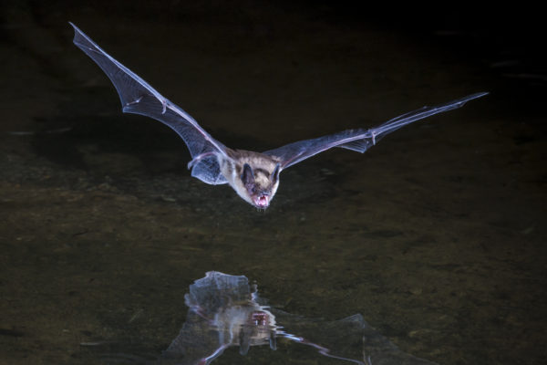 Going batty: I think we can understand consciousness